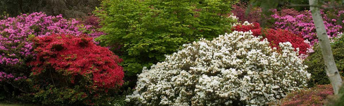 Clyne in Bloom