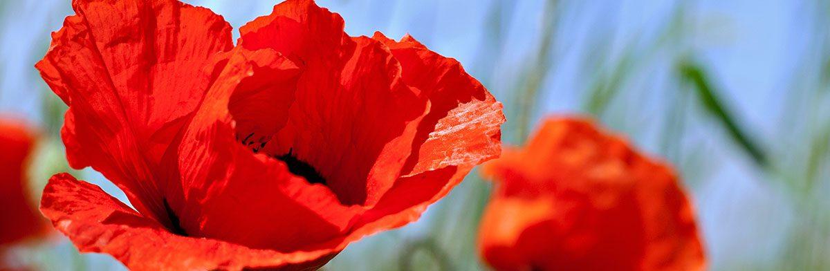 Swansea Remembers